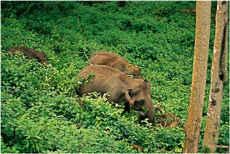 Thekkady Hill Station with Wild Life